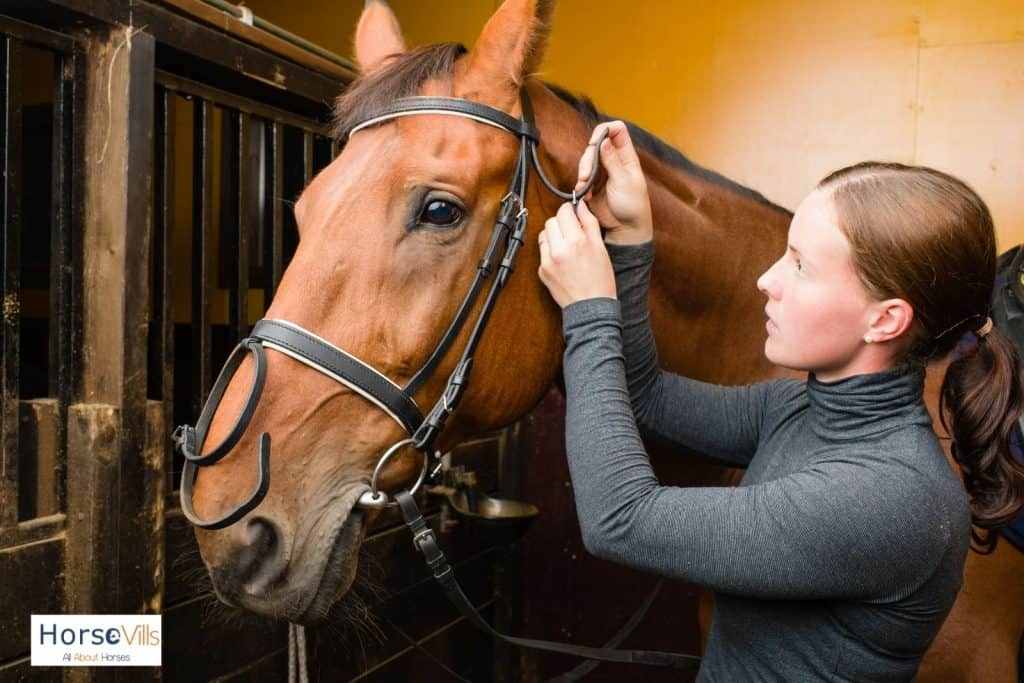 A woman fitting a snaffle bridle to her horse. Snaffle bridle is one of the types of horse bridles.