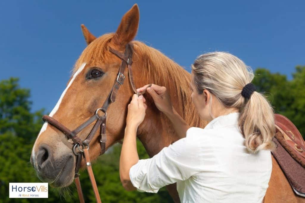a lady fitting mechanical hackamore, one type of horse bridles, to a brown horse
