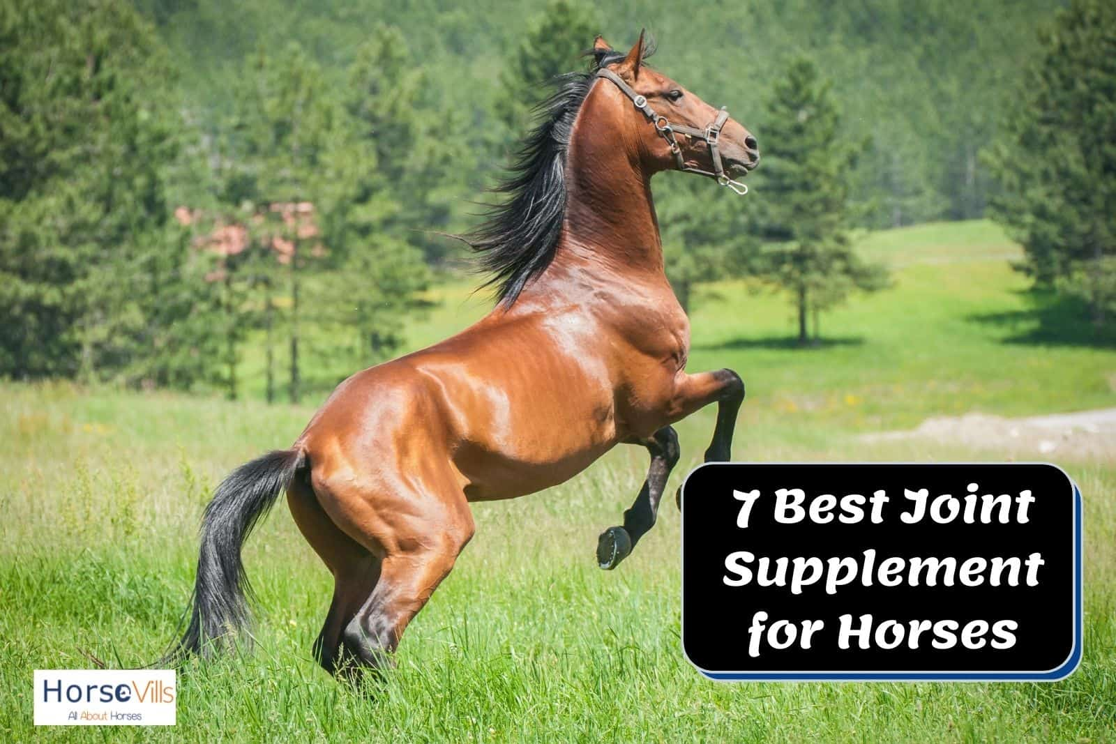 a brown horse galloping: what is the best Best joint supplement for horses to maintain their strength?