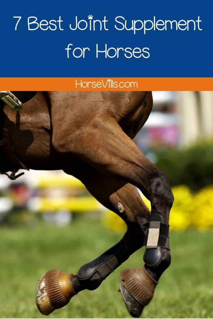 a close-up shot of a horse's joints but what is the Best Joint Supplement for Horses?