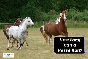 How Long Can a Horse Run wa