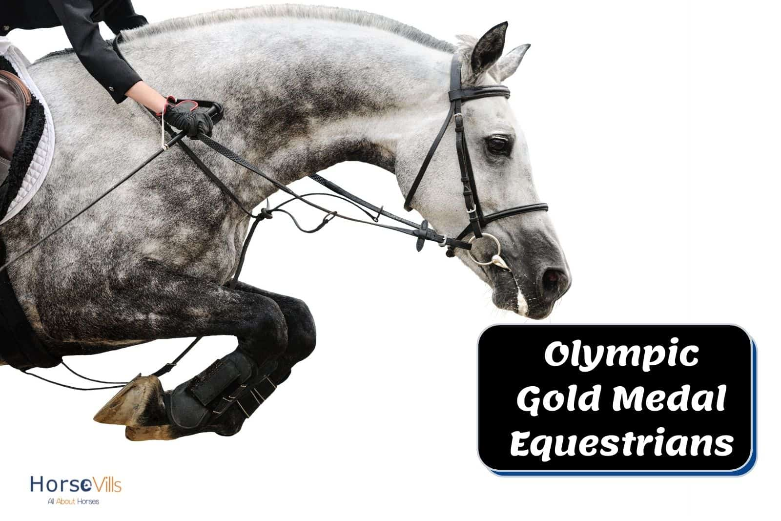 an Olympic gold medal equestrian riding a dappled gray horse for showjumping event