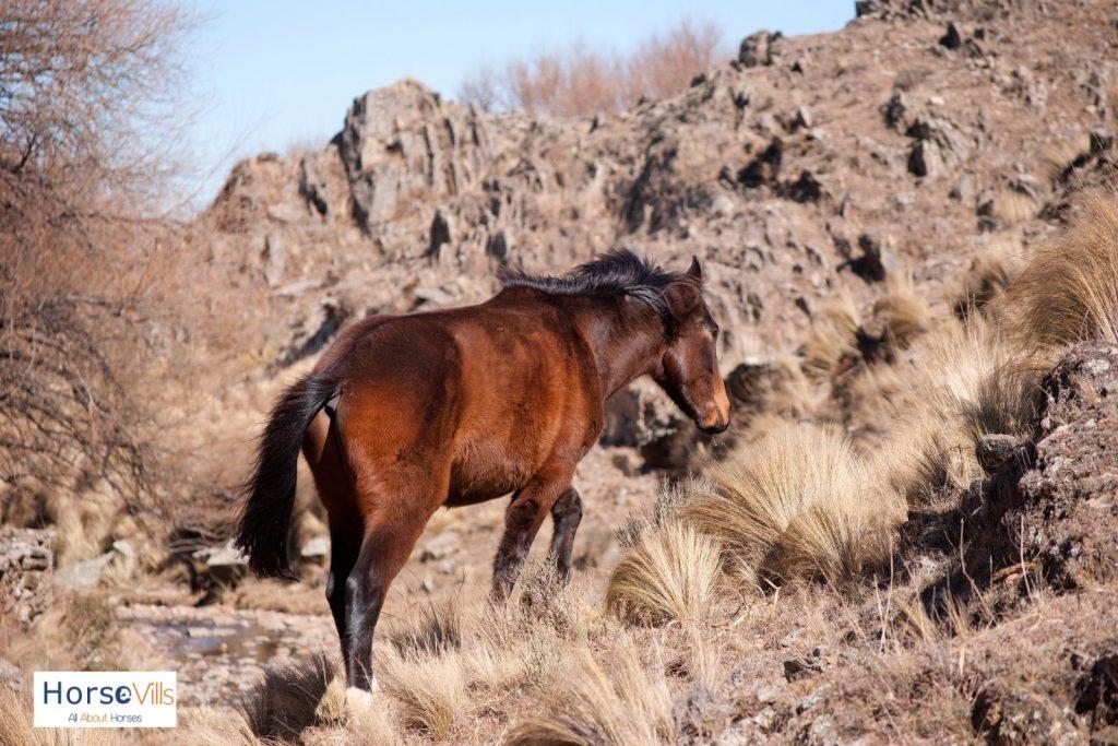 brown horse climbing a mountain