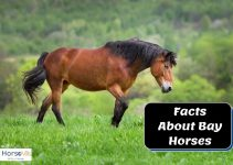 Everything About Bay Colored Horses (Detailed Guide)