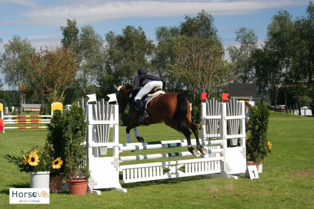 equestrian riding a show jumping horse