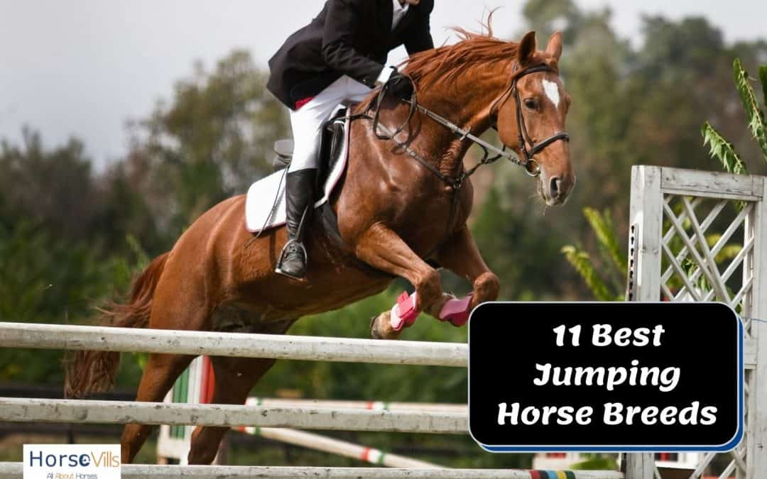 Top 11 Best Show Jumping Horse Breeds