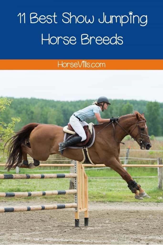 brown horse jumping so high