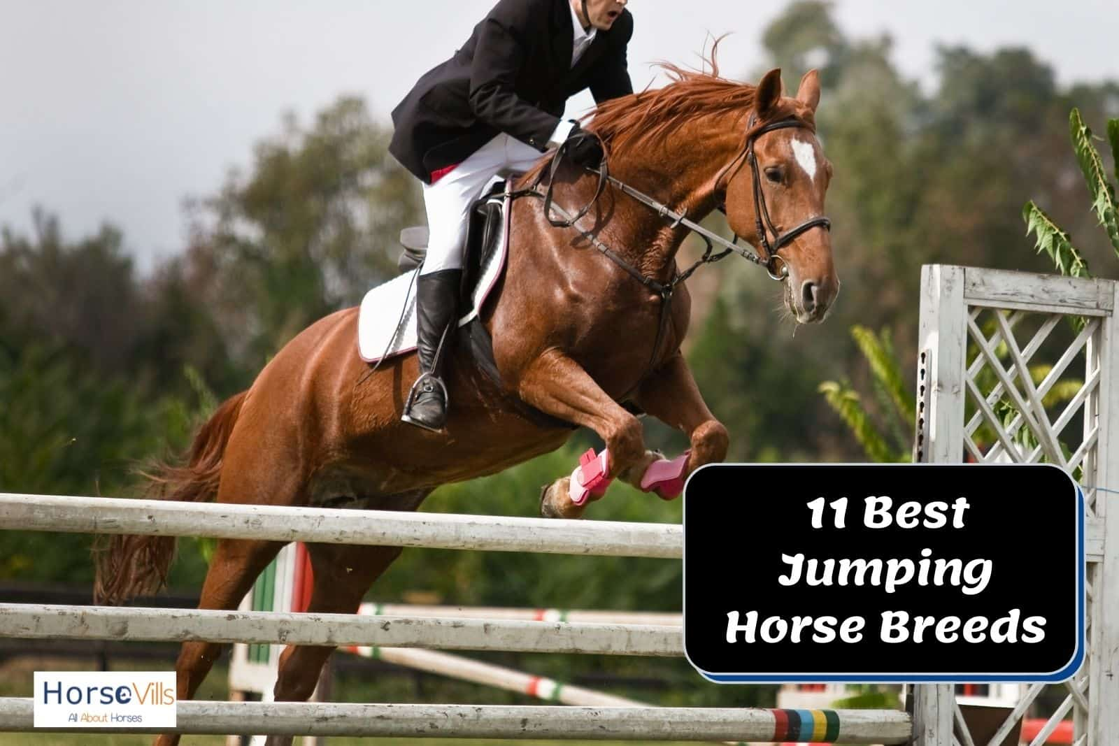an equestrian riding one of the best jumping horses