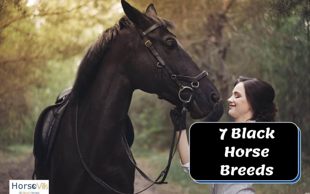 7 Graceful Black Horse Breeds You Must Know
