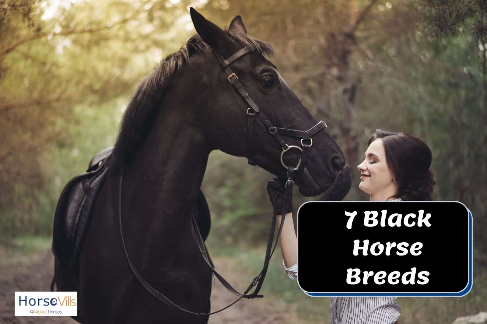 an equestrian touching the face of a black horse