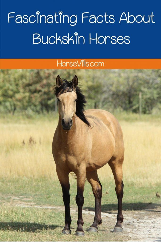 a tall buckskin horse
