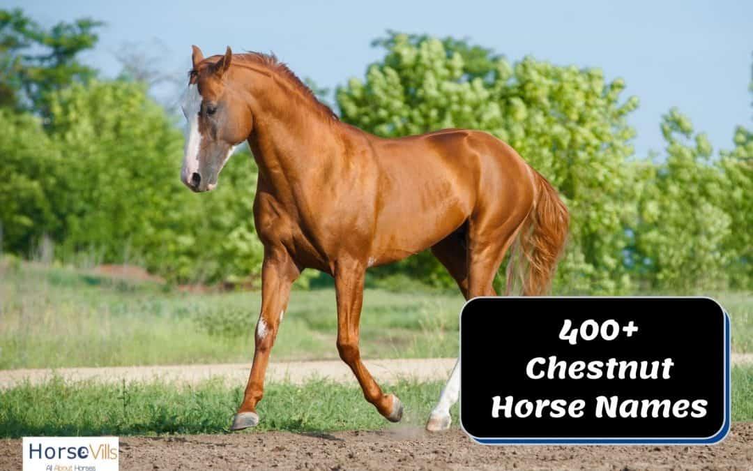 400+ Mesmerizing Names for Chestnut Horses