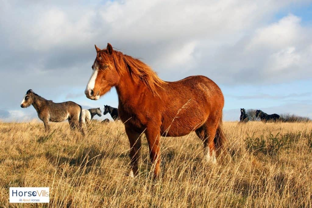 a huge chestnut mare with the other colored horses
