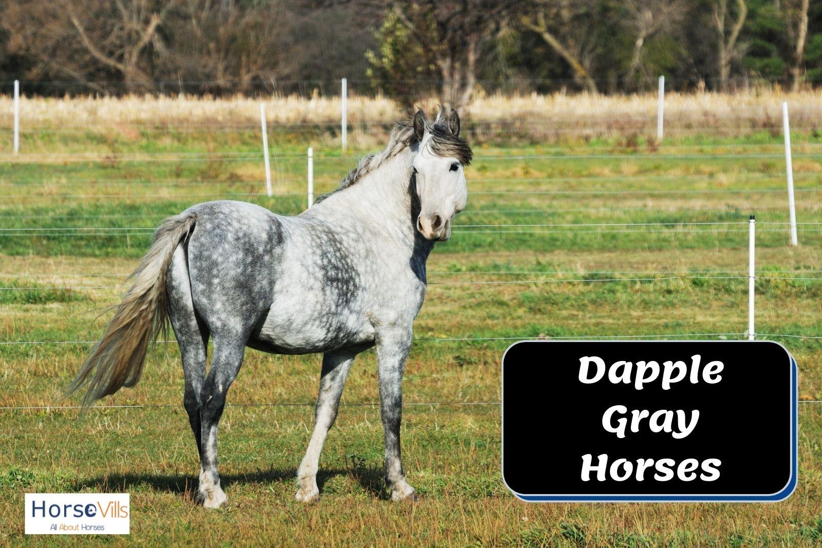 dapple gray horses looking at the back