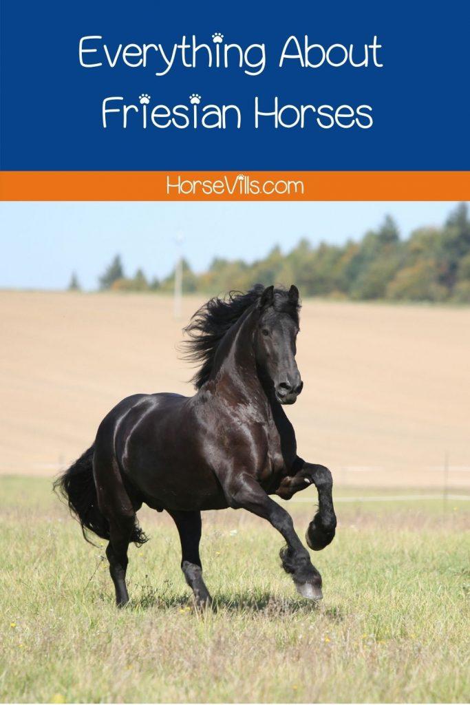friesian horse galloping