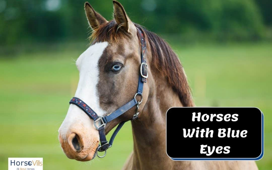 Everything to Know About Blue-Eyed Horses