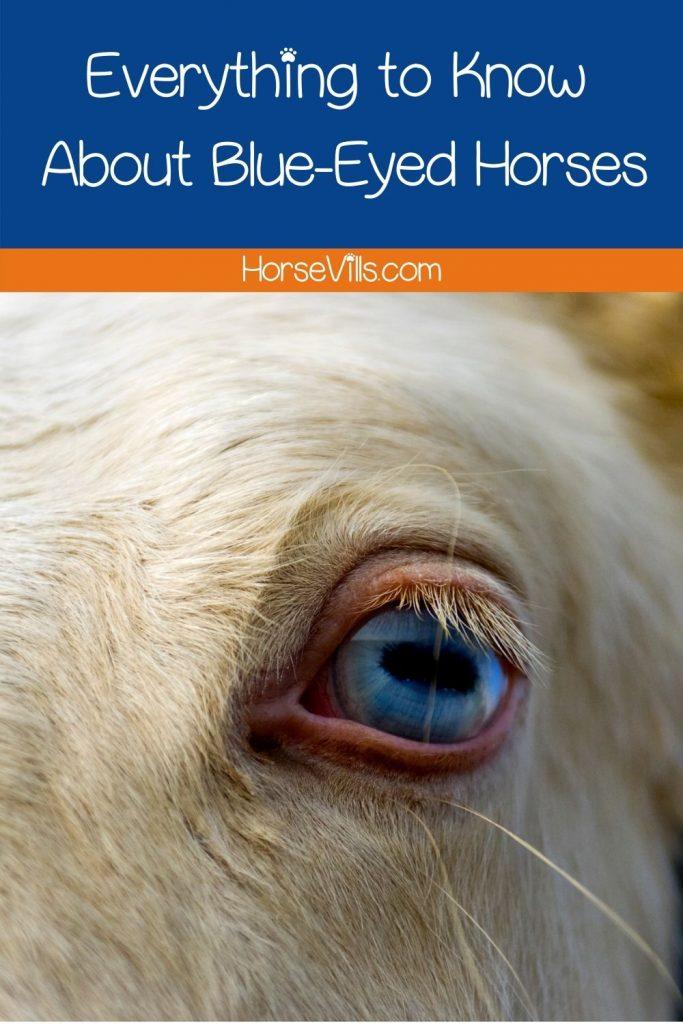 white horse with blue eyes