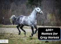 400+ Charming Names for Gray Horses
