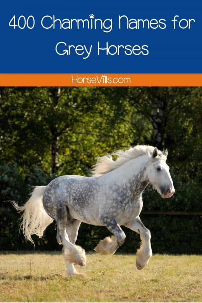 galloping dappled gray horse