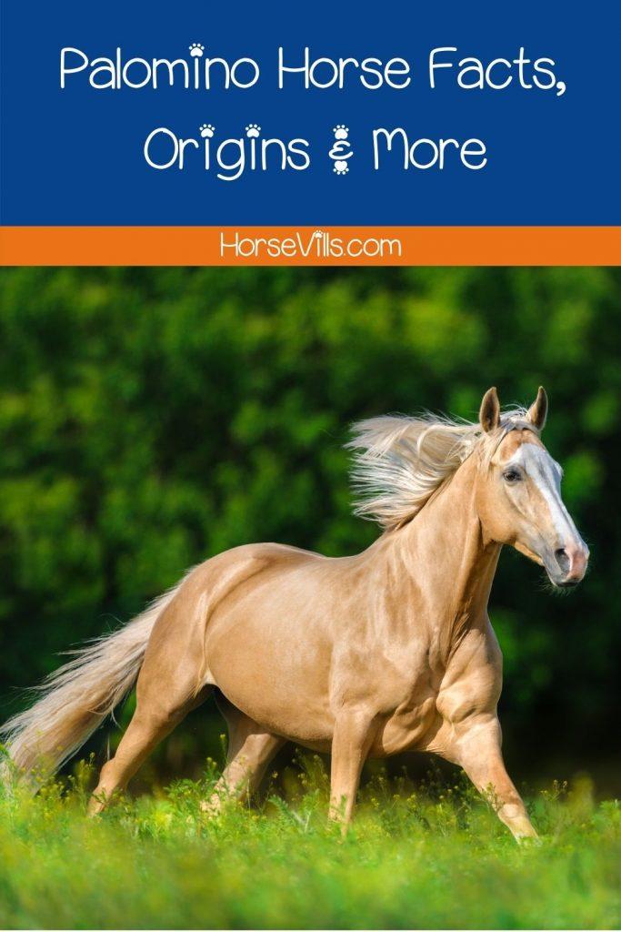 creamy palomino horse