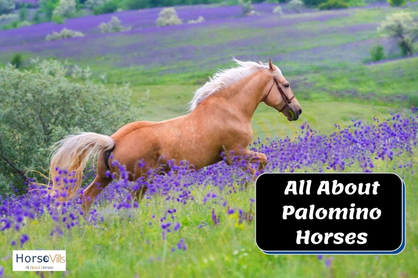 a gorgeous palomino horse surrounded with violet flowers