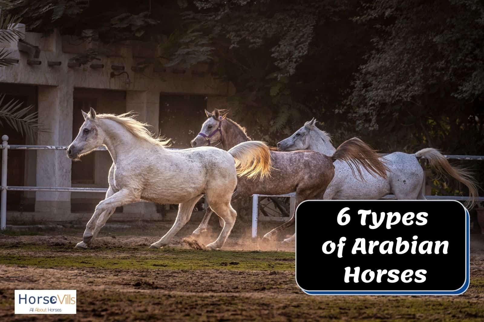 different types of Arabian horses running together