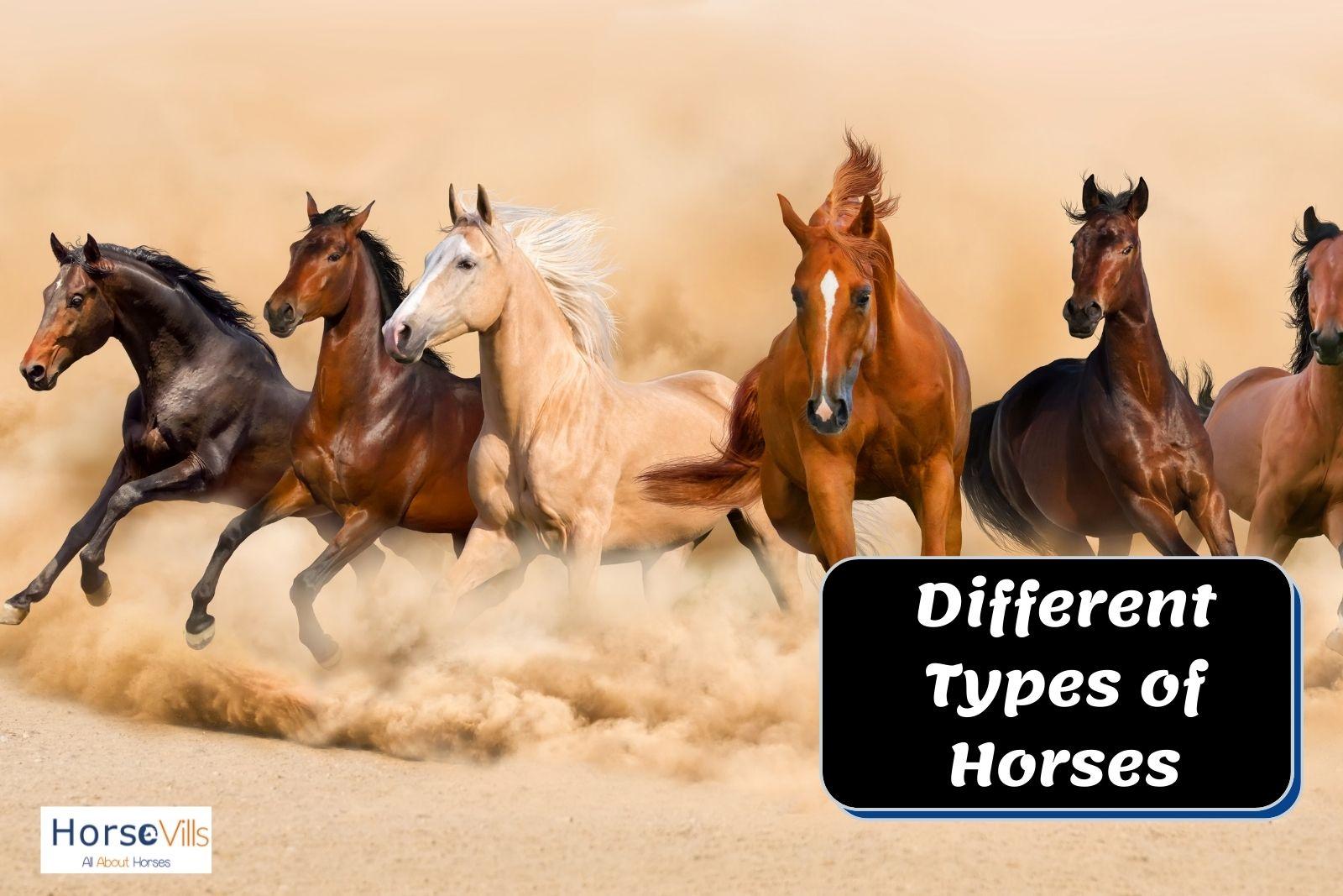 different types of horses running in the desert