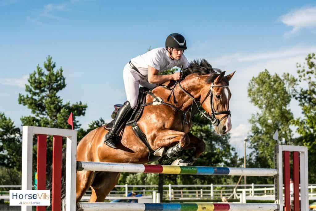 Irish sport horse showjumping with an equestrian