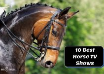 10 Must-Watch Horse TV Shows to Add to Your List