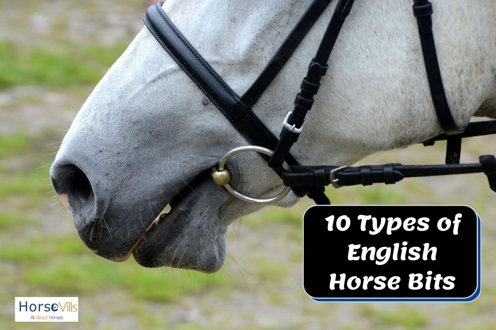 a gray horse wearing English riding bits