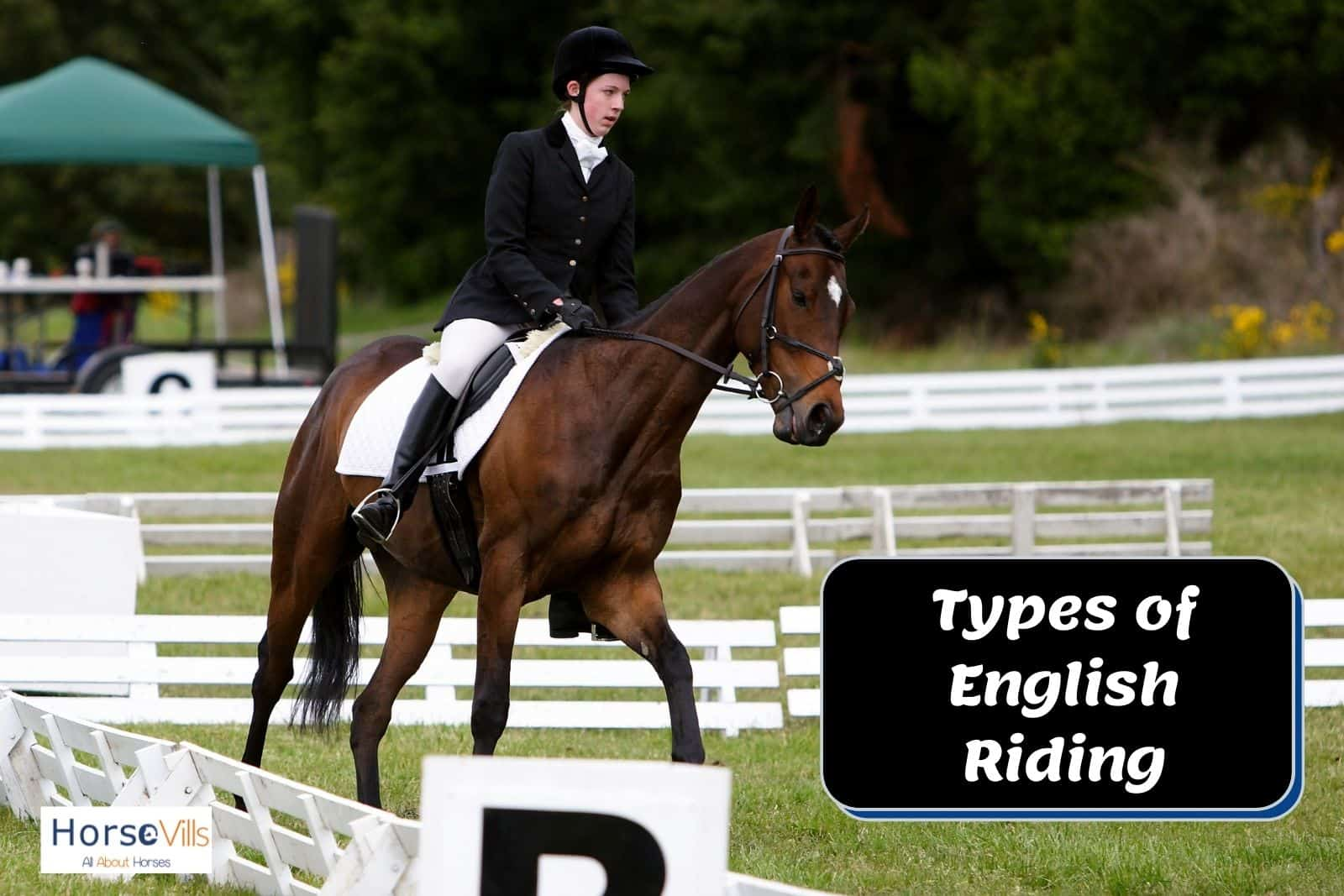 a man and his horse in a dressage event