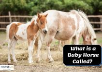 What Do You Call Baby Horses? (Complete Guide from an Expert)