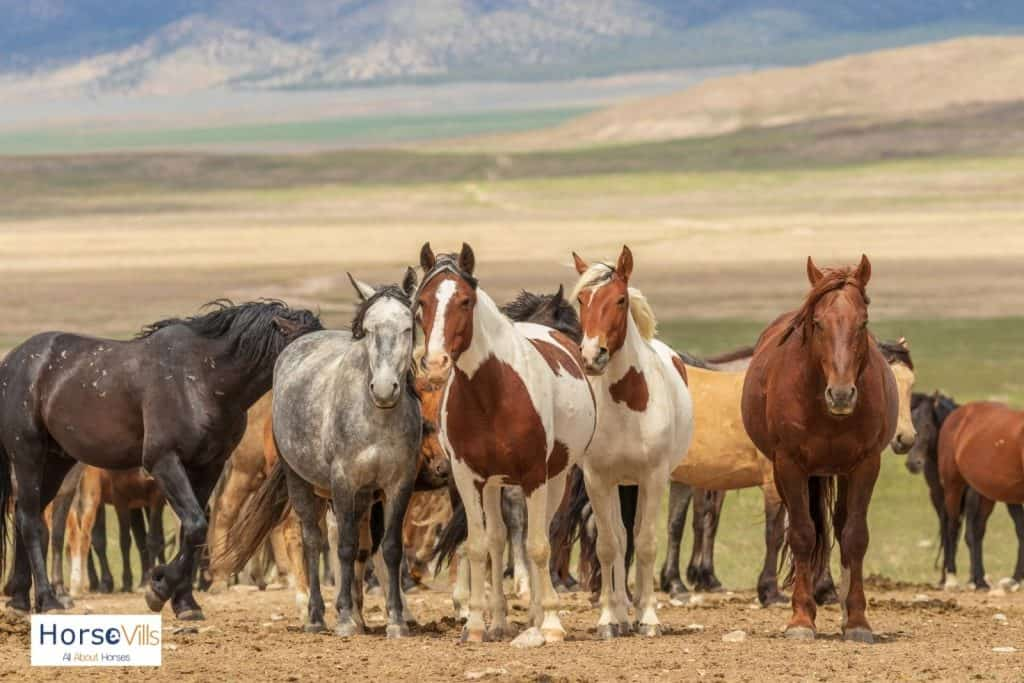 herd of horse in the mountains