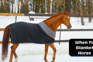 7 Factors to Consider When Blanketing a Horse