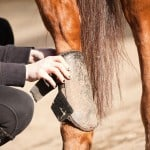 a horse wearing boots that support tendon injury