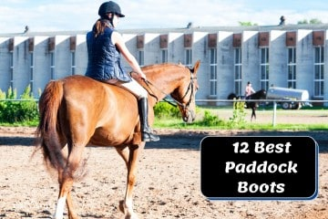 Top 12 Paddock Boots for Riding (2021 Choices)