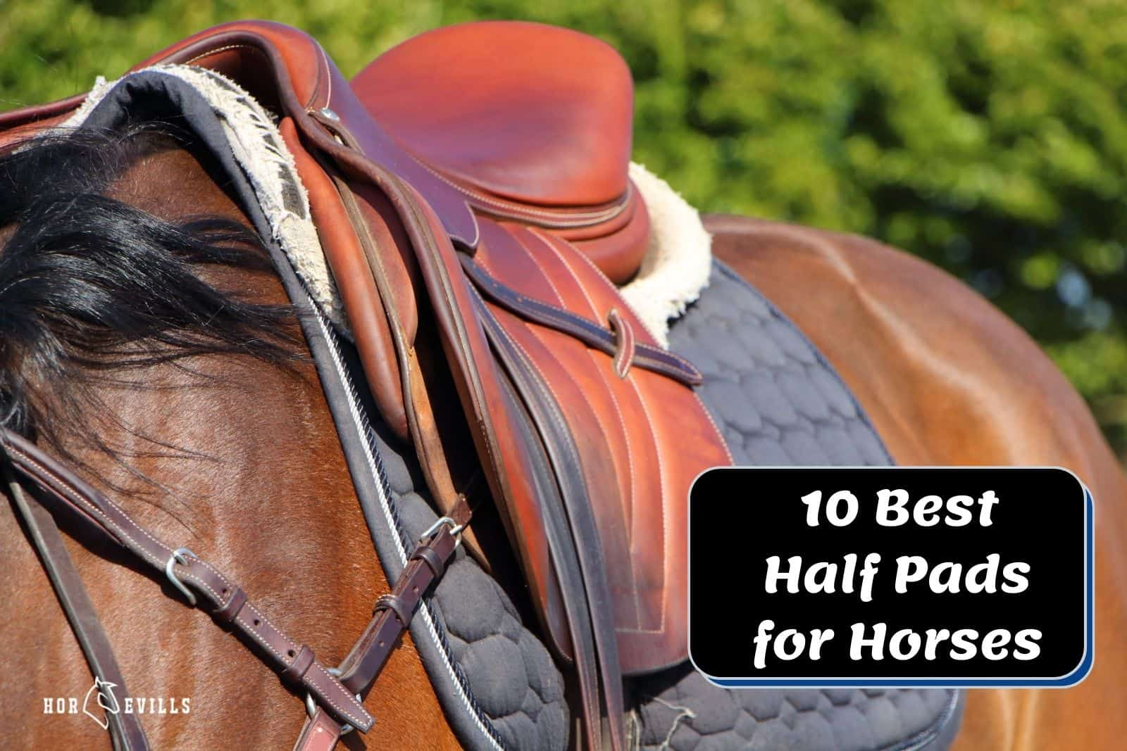 horse wearing the best half pads for horses