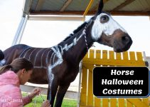 35 Pretty Halloween Costumes for Your Horses to Try