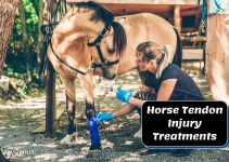 What You Should Know About Tendon Injuries in Horses