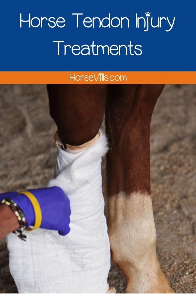 a vet doing horse tendon injury treatments