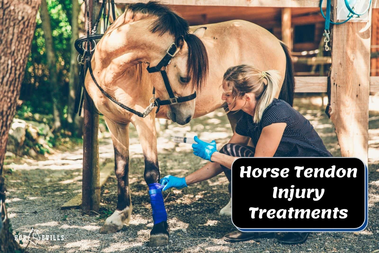 a lady treating his horse tendon injury