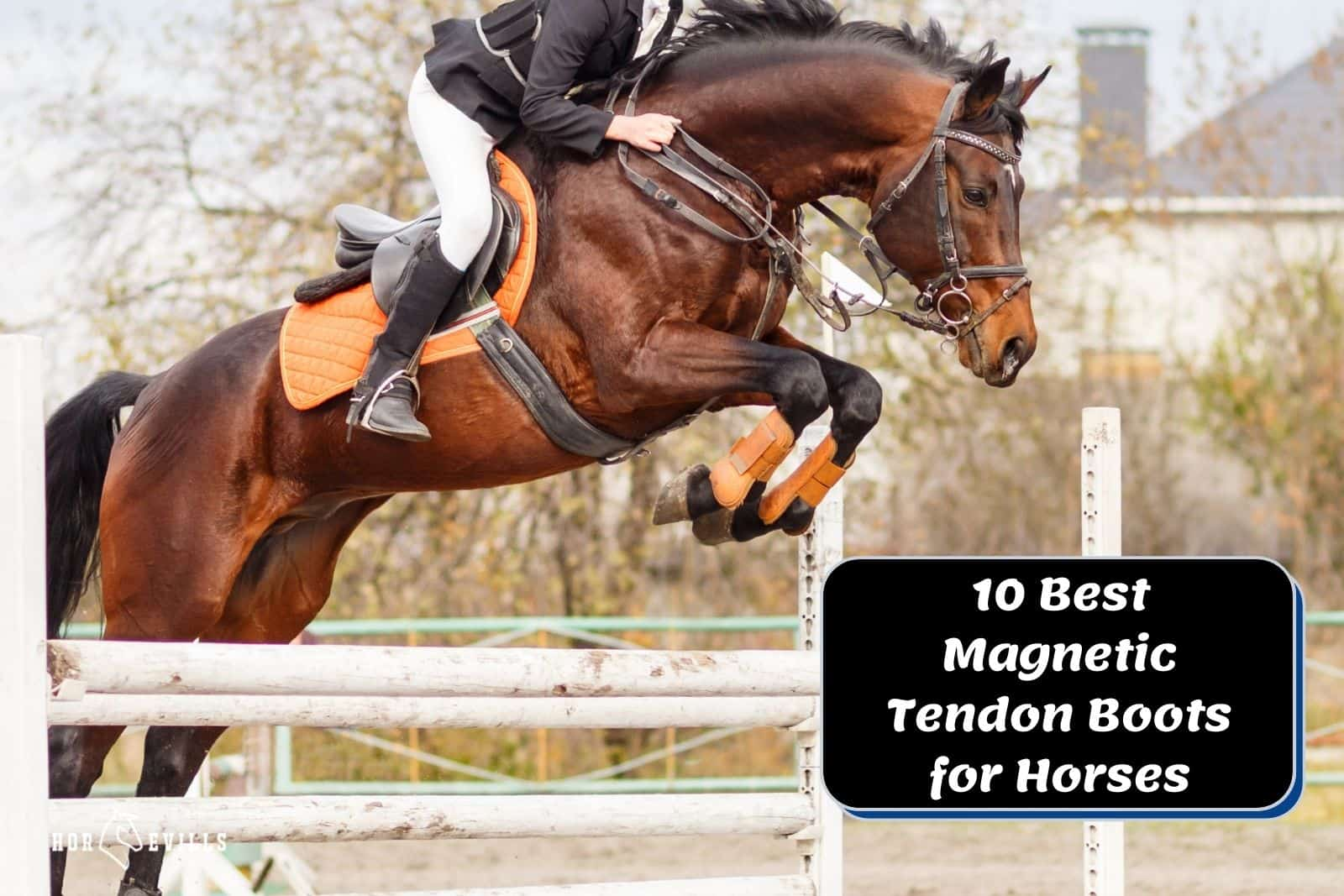 stallion in a showjumping competition using his magnetic tendon boots for horses