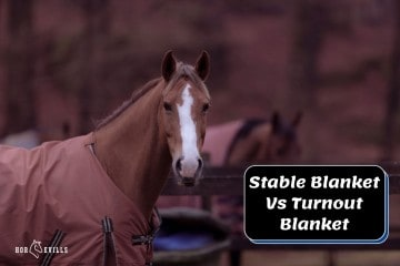 What is the Difference Between Stable and Turnout Blankets?