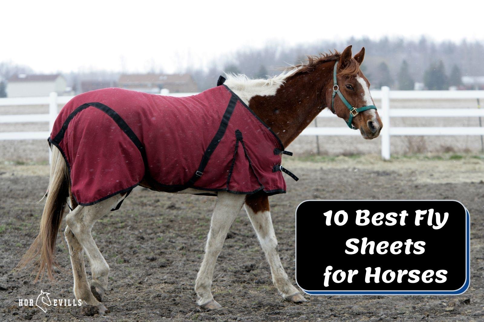 stallion wearing one of the best flysheets for horses